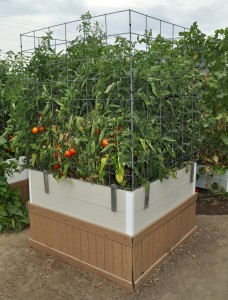 raisedbed.tomatoes